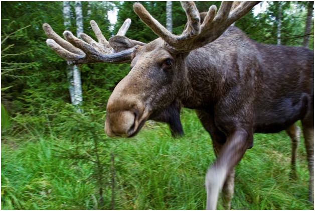 Охотничье хозяйство - Шипов Лес